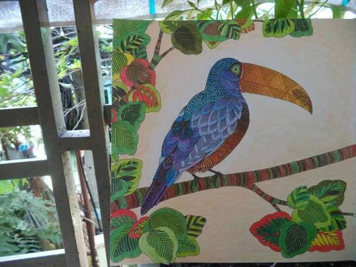 Coloring Books Animal Kingdom