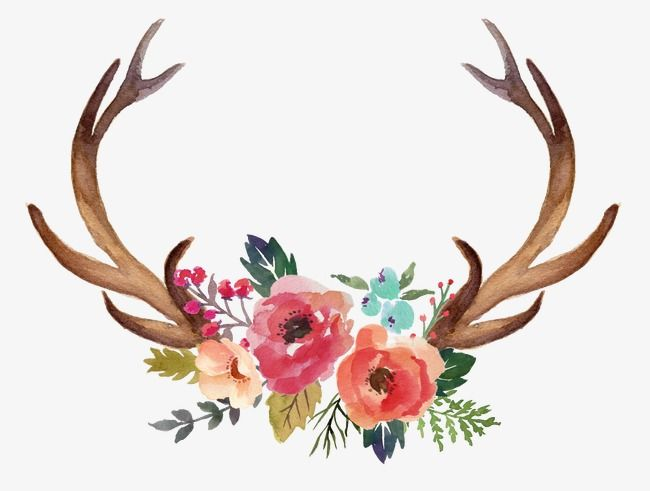 Horn Flowers Hand Painted Horn Flowers Png Transparent Clipart Image And Psd File For Free Download Painted Antlers Floral Antlers Watercolor Deer