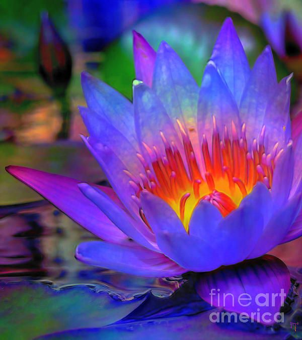 Blue Lotus by Byron Fli Walker