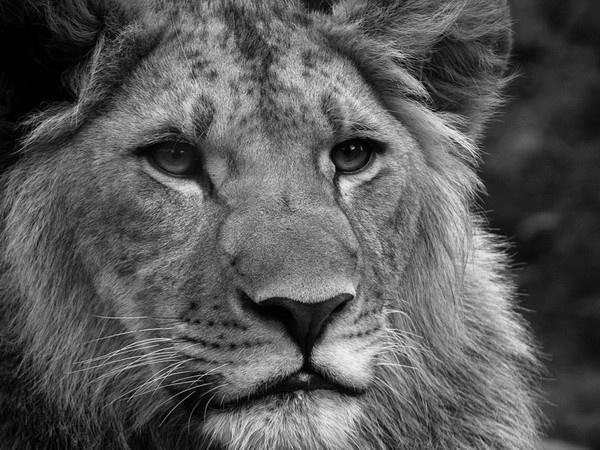"""""""Le fait d'enfermer dans une cage des animaux libres et fiers est l'un des procédés les plus abominables de la colonisation."""""""