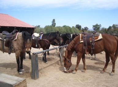 rancho de los caballeros dude ranch