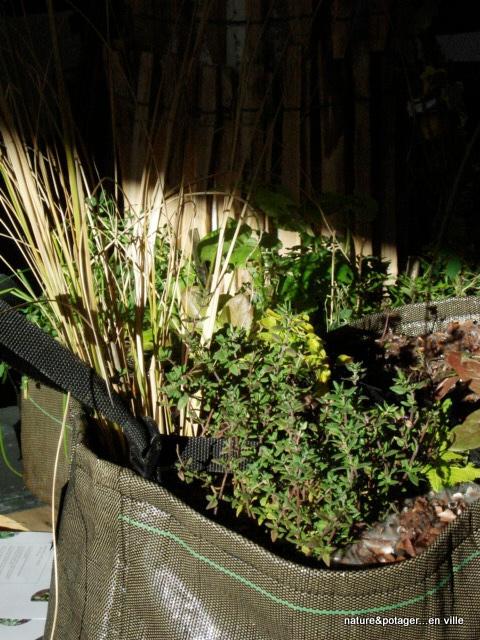 Des plantes aromatiques pour des tisanes maison http for Tisane pour mincir