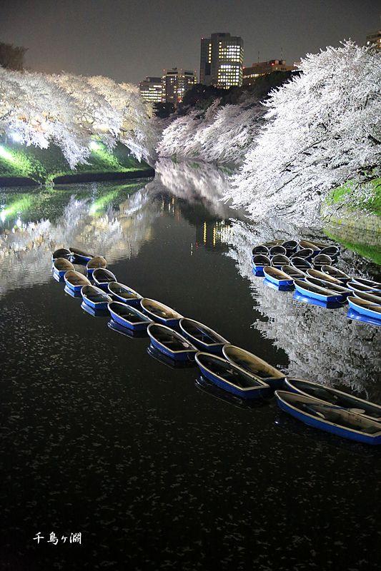 千鳥ヶ淵, Tokyo Japan