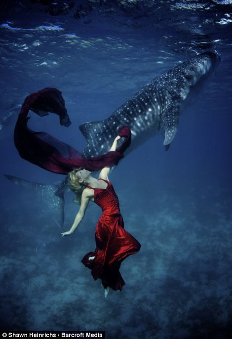 Underwater model, Hannah Fraser, poses infront of a passing Whale shark