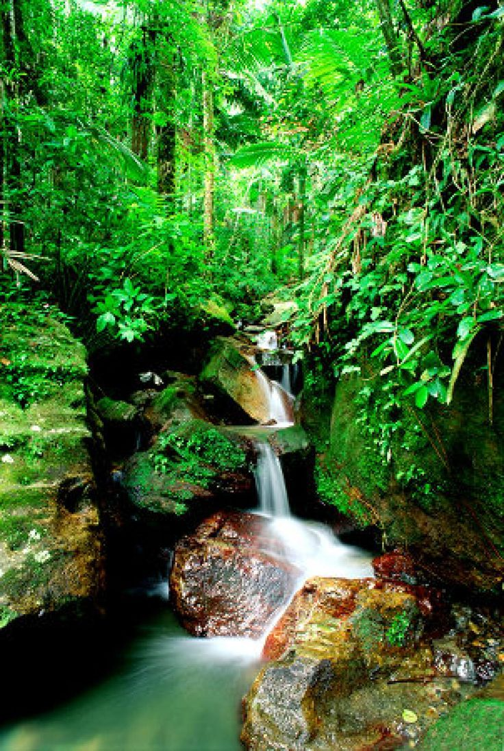 El Yunque National Forest is located on the island of Puerto Rico.  El Yunque is the only tropical rain forest in the United States National Forest System. It is home to some of the last Puerto Rican Parrots.