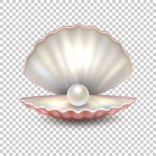 Best Oyster With Pearl Illustrations, Royalty-Free Vector ...