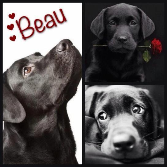 Beau - the proposition