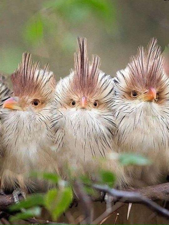 Днем, прикольная картинка птица