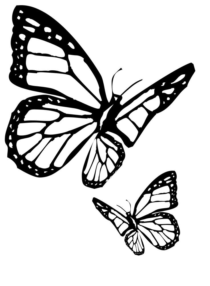 89 Viceroy Butterfly Coloring Page