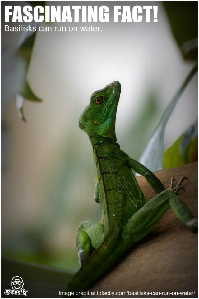24 best Amphibians and Reptiles Facts images on Pinterest