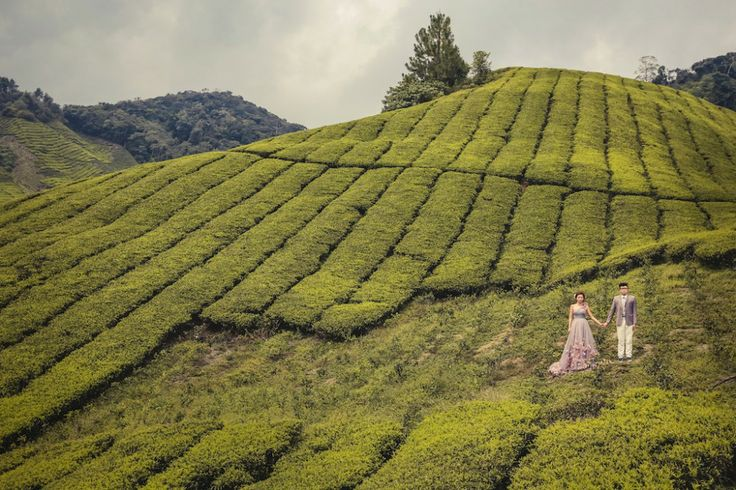 Taking their love to new heights, Zen and Ice opted for the picturesque hill stations of Malaysia's Cameron Highlands for their pre-wedding photo shoot. The cool weather together with a landscape featuring tea estates, orchards, and waterfalls produces a location renowned for romantic photography. Image by Jimmy Tan