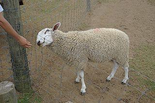 @nifty:デイリーポータルZ:羊を数えて眠くなろう