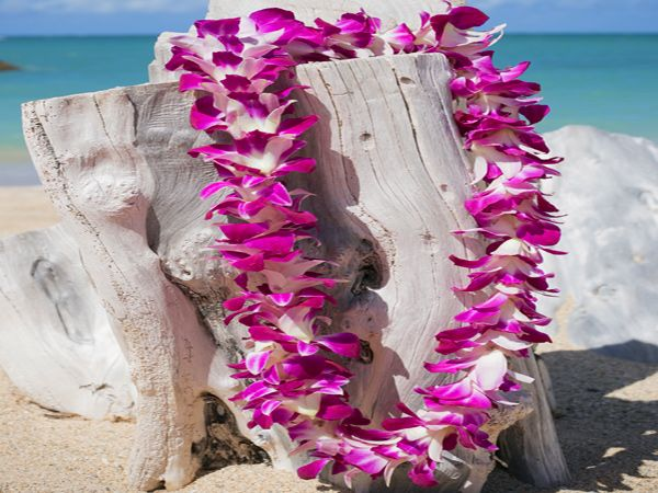 58 best hawaiian lei greetings images on pinterest honolulu start your trip off with one of the oahu lei greetings at the airport hawaii m4hsunfo
