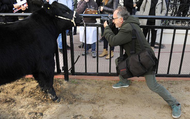 130° Exposición de Ganadería, Agricultura e Industria Internacional. Feria Rural en Buenos Aires 2016