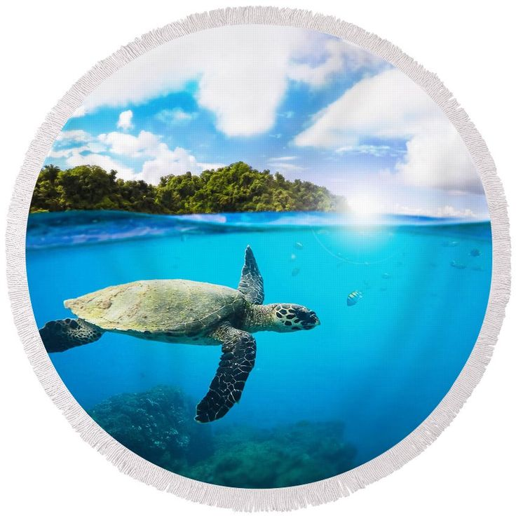 #beach #beachtowel #towel #roundtowel #round #tropical #summer #diving #underwater #turtle #overunder