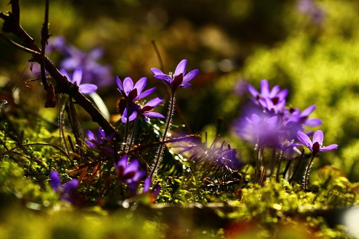 Blue beautiful flowers by Laura Lakstedt on 500px