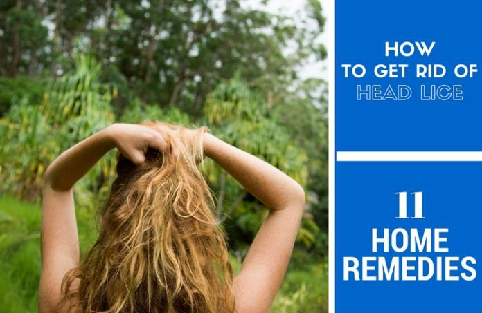 417 best home remedies for head lice images on pinterest hair lice natural remedies and. Black Bedroom Furniture Sets. Home Design Ideas