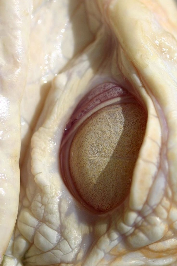 awesome eye photo. is it an albino alligator?