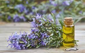 Bio Alter Ego: olio essenziale rosmarino per circolazione