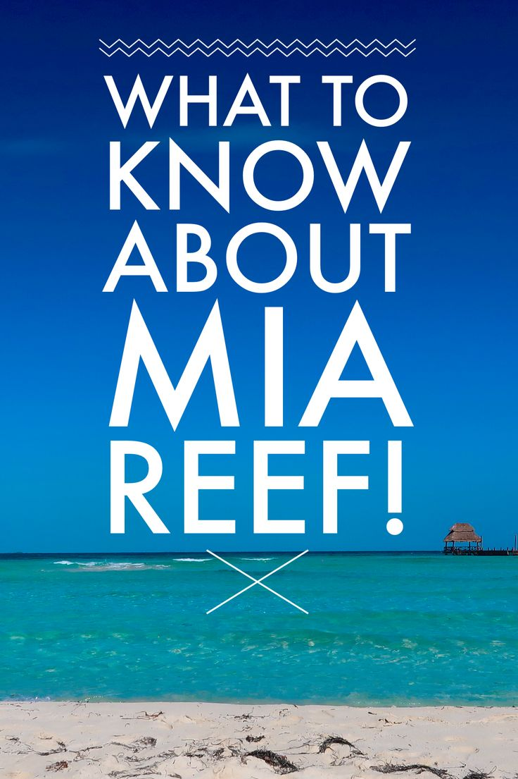 Great details to know about the Mia Reef all inclusive resort on Isla Mujeres! Isla Mujeres | Mia Reef all inclusive | Isla Mujeres hotels | Isla Mujeres lodging