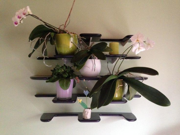 Fleimio Pine Cone: flowers on the wall.