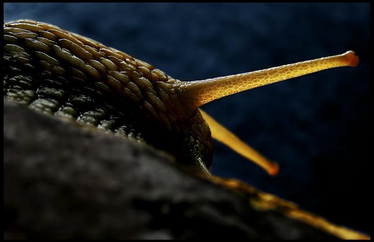 Mega Snail