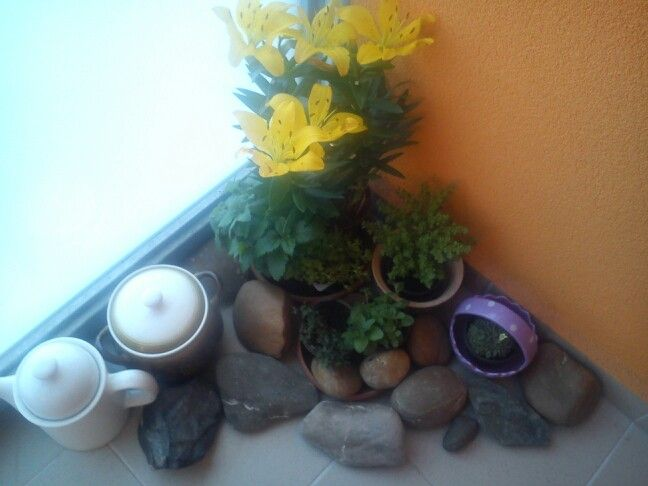 Lilie-kvetina od dcery obohatila moji zahradku