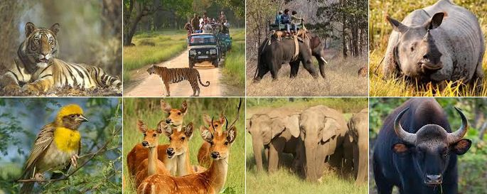 We offer a selection of wildlife tours in India, including tiger tracking and bird watching, plus tailormade holidays to all of India's national parks. For booking details mail us at subhash@zeropoint.co.in or call @9903228000 www.zeropoint.co.in