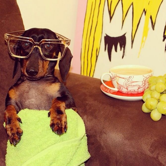 Every #hotdawg needs his downtime.