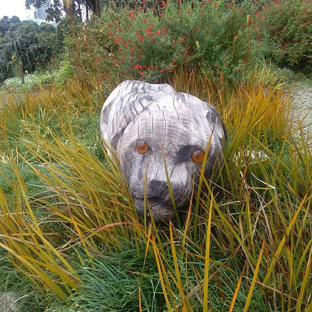 There's a big cat hiding in the grass. One of our amazing wood sculptures crouched in the garden at Lake House Arts. #cat #cats #catstagram #sculpture #grass #creative #art #arts #outdoors #imagination