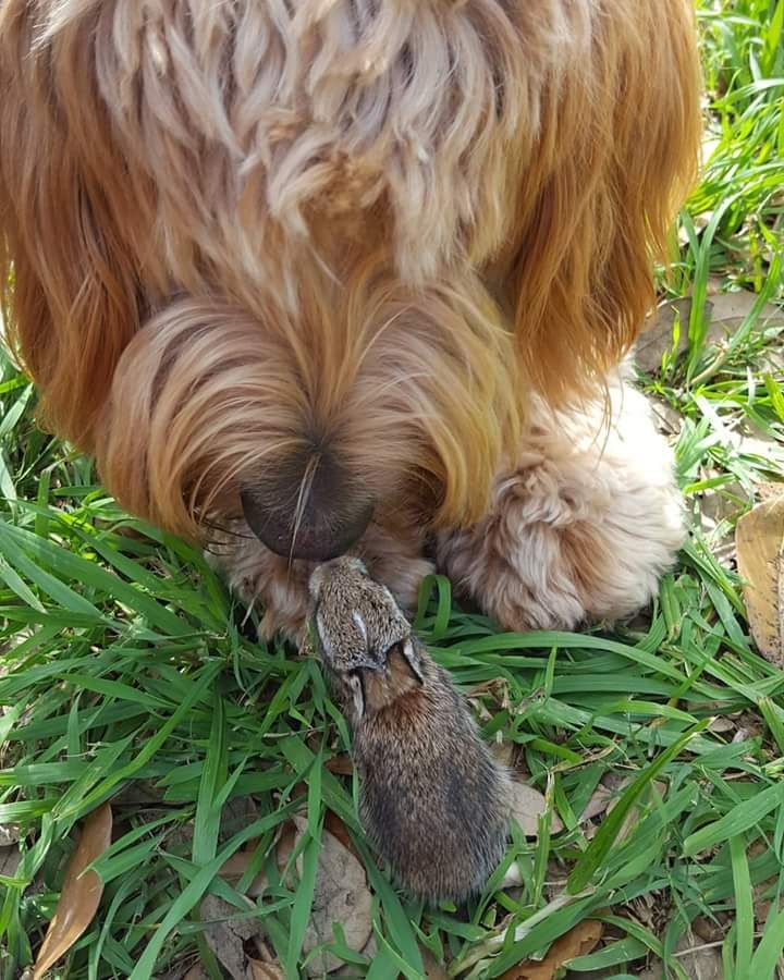 My goldendoodle loves wild baby rabbits. http://ift.tt/2pHeCpW