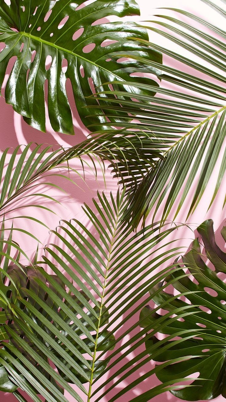 Green, leaves, pink