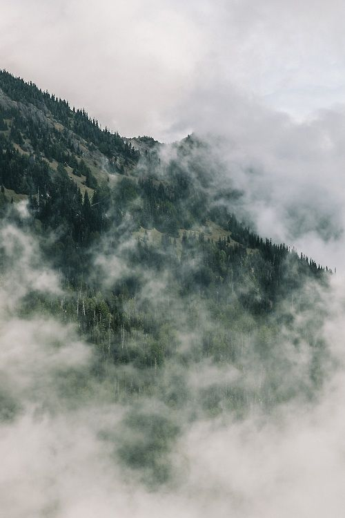 fibrose:  proflower:  more nature here  nature blog.