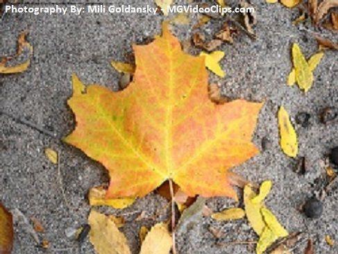 Fall, Toronto, ON, Canada