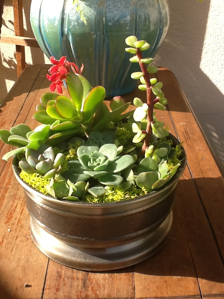 511 Best Container Gardening Ideas Images On Pinterest: 17 Best Images About Succulents On Pinterest
