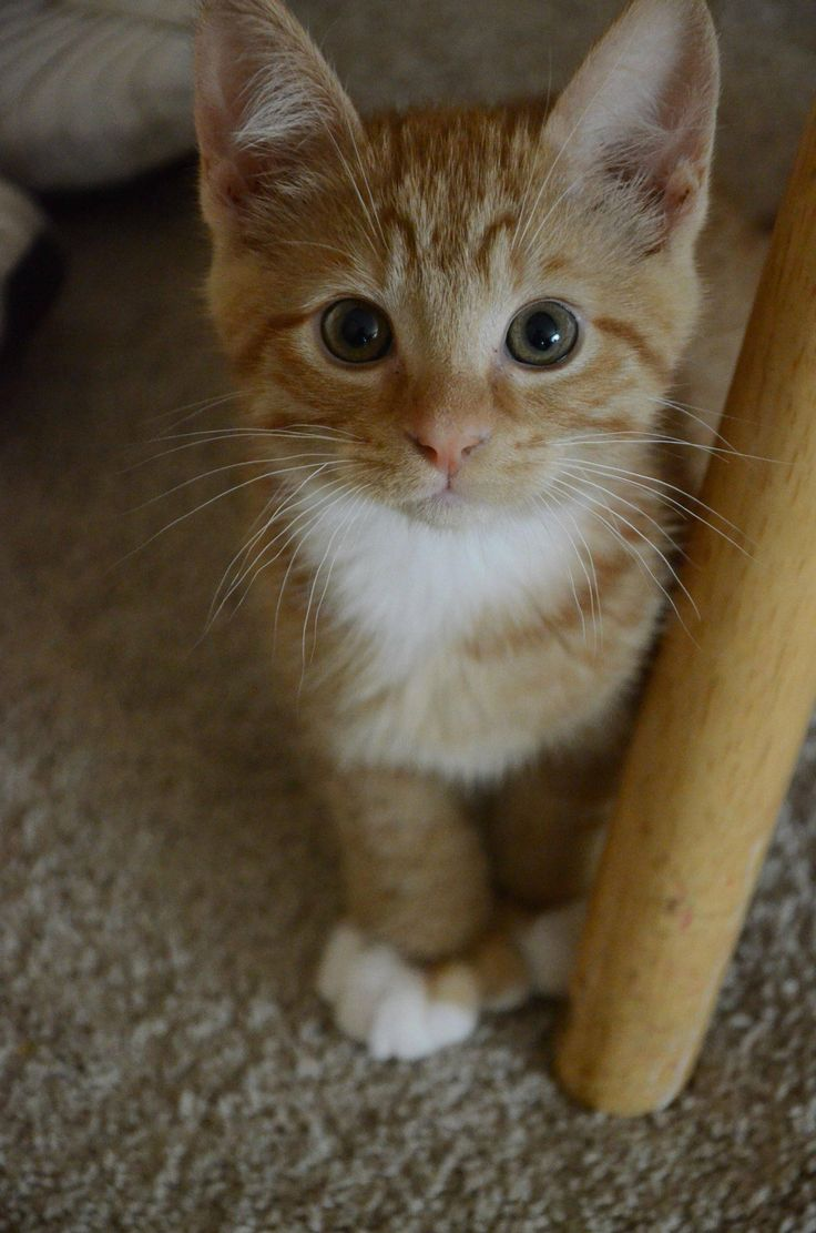 Say hello to Mills! cute cat Cats Pinterest Tabby