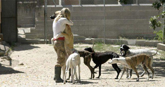 Crear un Refugio para Animales Abandonados, con Asistencia Veterinaria gratuita