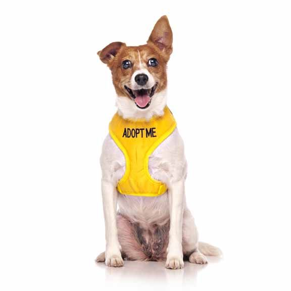"Yellow ADOPT ME vest harness | Fits Max Neck 31cm (12"") Chest 38-60cm (15-24"") 