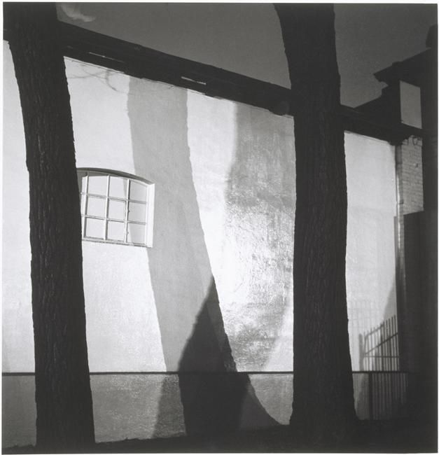 "wetreesinart:  ""  Herbert List (All. 1903-1975), Baumschatten, Hamburg (Ombres jetées, Hambourg), 1931, épreuve gélatino-argentique, 18,7 x 18 cm, Paris, musée national d'Art moderne - Centre Georges Pompidou  """