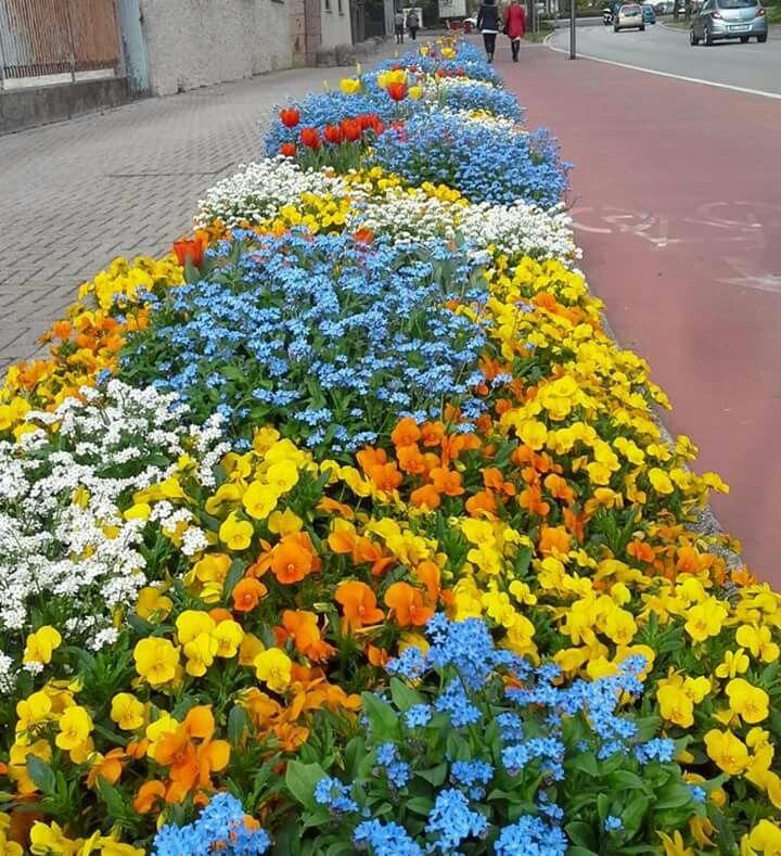 Pordenone, aiuole fiorite