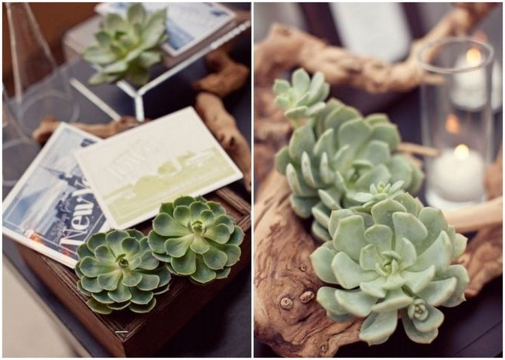 Succulents are the quintessential Californian wedding decor accessory. See tips on incorporating them into your destination wedding here...