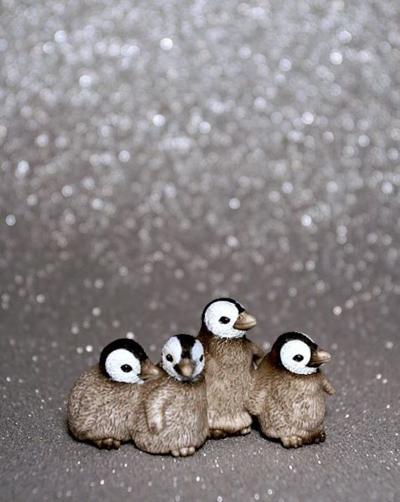 Baby Penguins Photograph Various Sizes by BACLORI on Etsy