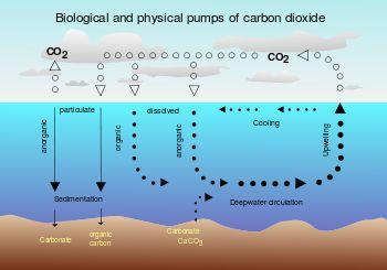 Carbon sink - Wikipedia, the free encyclopedia