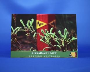 Postcard - Kangaroo Paw. A common sight out on the Bibbulmun Track.