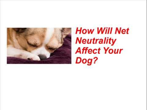 SHOCKING VIDEO - Net Neutrality and Your Dogs !!!!!