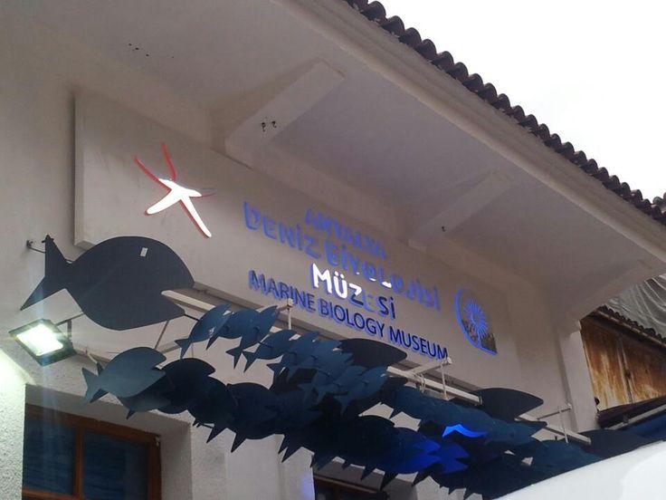 Deniz Biyolojisi Müzesi Açıldı