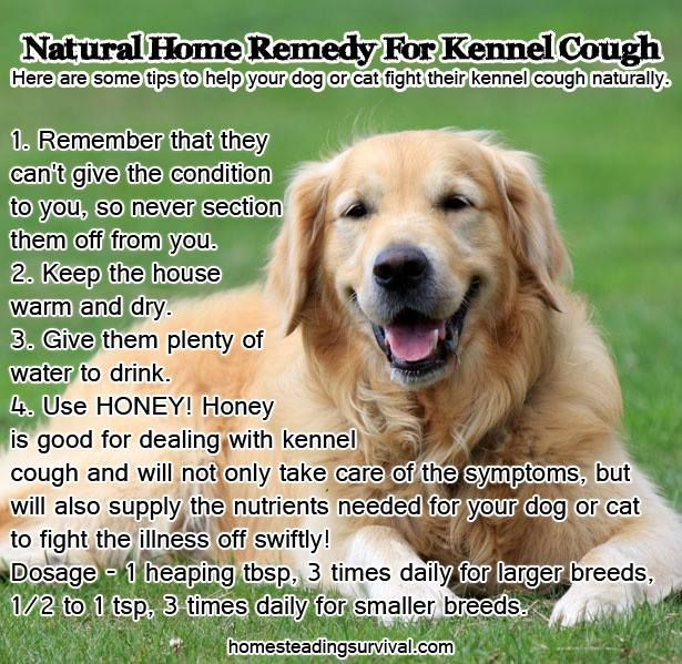 Natural Home Remedy For Kennel Cough!  More info here: http://homesteadingsurvival.com/natural-home-remedy-for-kennel-cough/