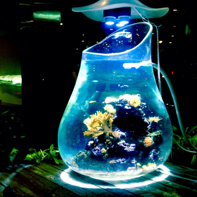 17 Best Images About Project Fish Tank On Pinterest: 17 Best Images About Tanked On Pinterest
