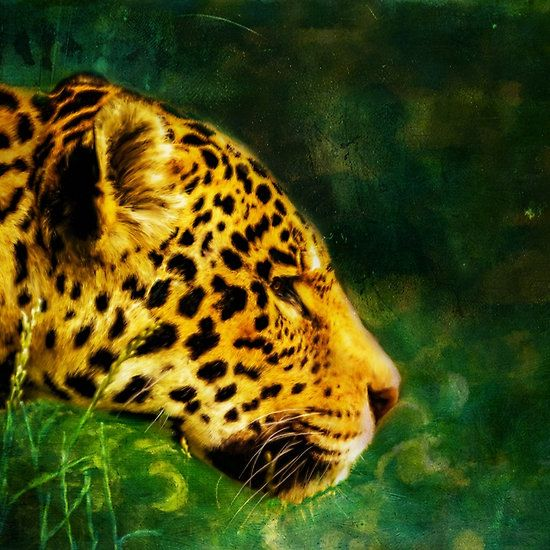 Jaguar in the grass - digital painting by Tracey Everington of Tracey Lee Art Designs