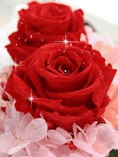 Imagen para regalar por el Día de la Madre de lindas rosas con movimiento rosas brillantes